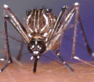第10回蚊分類学を志す若手研究者のための現地研修(申込8/31迄)